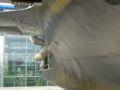 Argonaute FS S636 p1040827.jpg