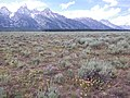 Artemisia arbuscula and Artemisia tridentata vaseyana (9371406757).jpg