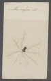 Atax - Print - Iconographia Zoologica - Special Collections University of Amsterdam - UBAINV0274 070 01 0002.tif