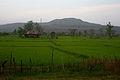 Attapeu rice fields.jpg