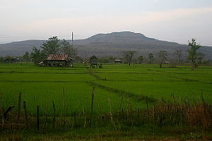 Attapeu Province - Rice fields