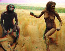 http://upload.wikimedia.org/wikipedia/commons/thumb/b/b6/Australopithecus_couple.jpg/250px-Australopithecus_couple.jpg