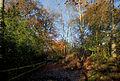 Autumn, Reigate, Surrey (8240956400).jpg