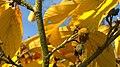 Autumn (124021423).jpeg