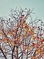 Autumn 2015 (127915773).jpeg