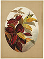 Autumn Leaves - Oval Shapes (Boston Public Library).jpg