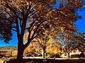 Autumn in Australia.jpg