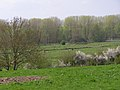Avon valley floodplain north of Downton - geograph.org.uk - 160422.jpg