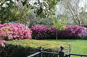 River Oaks Garden Club Forum of Civics - Image: Azalea's at Houston's River Oaks Garden Club