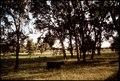 BLACK ANGUS CATTLE AT RANCH - NARA - 542628.tif