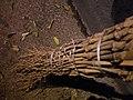Balais en bambou - DIY - bamboo brooms - Alain Van den Hende - licence CC40 - SAM 3925.jpg
