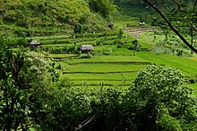Bali, rice terraces 1.jpg