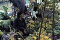 Bangkok-1965-024 hg.jpg