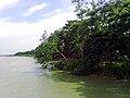 Bangladeshi River erosion in Shariatpur 2.jpg