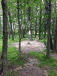 Basket in forest clearing at Lochness Park disc golf course.JPG