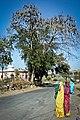 Bat tree (5580895689).jpg