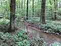 Battle Creek Cypress Swamp 51.jpg