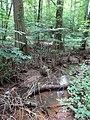 Battle Creek Cypress Swamp 54.jpg