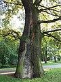 Baum oder Mauer - panoramio.jpg