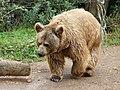 Bear (2379584561).jpg