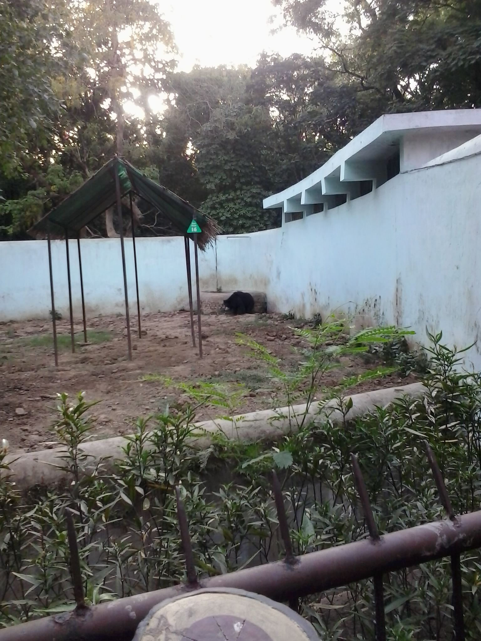File:Bear in patna zoo jpg - Wikimedia Commons