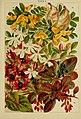 Beautiful flowering trees and shrubs for British and Irish gardens (1903) (20364868861).jpg