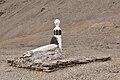 Beechey Island 003-AXW 0822.jpg