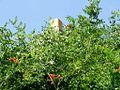 Benedict, tobacco barn (21415559418).jpg