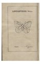 """Berger-Perrière, J. Aug., """" Introduction à l'histoire naturelle des insectes, en forme d'entretiens (...)"""".pdf"""