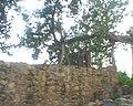 Bhangarh fort Rajasthan 24.jpg