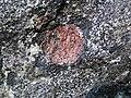Big garnet amphibolite (Precambrian; Warrensburg, Adirondack Mountains, New York State, USA) 46.jpg