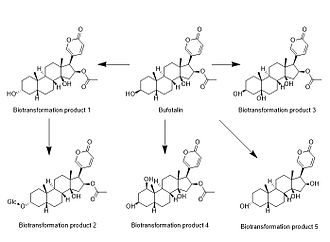 Bufotalin - The five known biotransformation products of bufotalin.