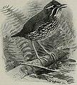 Bird-lore (1914) (14568699428).jpg