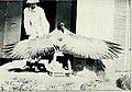 Bird notes (1913) (14563428229).jpg