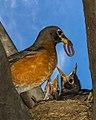 Birds (17114764343).jpg