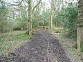 Blackdown Hills , Muddy Trail - geograph.org.uk - 1243837.jpg