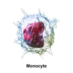 en un examen de sangre que significa monocitos