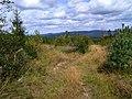 Blick zum Steinwald - panoramio.jpg