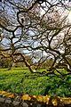 Blickling Hall, Gardens and Park (4514843078).jpg