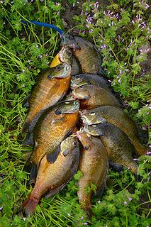 Woodrum Lake Wildlife Management Area