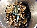 Bluish-crayfish sun FI-EU 2007-Aug-15 by-RAM.JPG