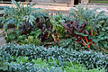Blumengärten Hirschstetten Wien 2014 Gemüse-Salatgarten b.jpg