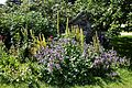 Border flowers and plants in the Walled Garden of Parham House, West Sussex, England.jpg