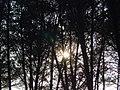 Bosc de Can Deu el 2004 06.jpg