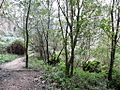 Bosque de laurisilva (4490551339).jpg