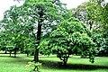 Botanic garden limbe31.jpg
