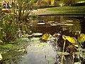 Botanischer Garten Freiburg - Botany Photography - panoramio (19).jpg