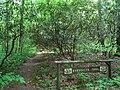 Bowman's Hill Wildflower Preserve - IMG 8301.JPG