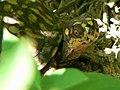 Box turtle at Cape May National Wildlife Refuge. (4678371869).jpg