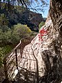 Boyce Thompson Arboretum, Superior, Arizona - panoramio (30).jpg
